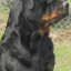Welcome to Rottieweiler's World