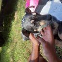 Canine Superstar